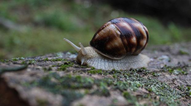 WordPress website loading slow